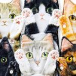 """ビヨ〜〜ンと伸びる猫ちゃんがリアルすぎてカワイイ♡""""なが~い猫タオル""""で癒されちゃおう♪"""