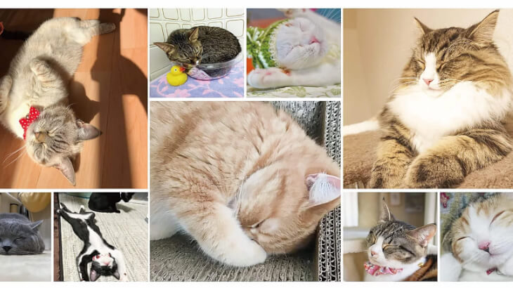 厳選された600枚の写真が公開中!ねこちゃんの寝顔を見て癒されよう♪『WEBねこにすと〜ねこ寝っこ篇〜』開催中♡