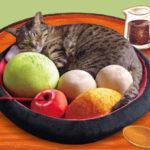 あなたのお家の猫ちゃんがあんみつの具になっちゃうキュートな『あんみつにゃんこクッション』登場♪