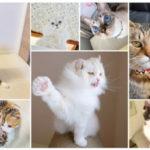 "『WEBねこにすと』第2弾のテーマは""ニャンと素敵な奇跡の一枚〜猫自慢篇〜""!600匹のにゃんこ写真公開中♪"