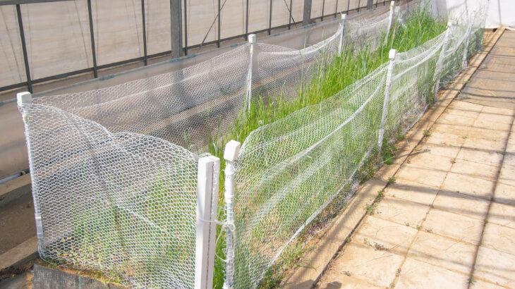 湘南エリア初のラビットラン『Rabbit Park FUJISAWA』 4/24よりグランドオープン!イチゴの乾燥葉の無償プレゼントも実施中