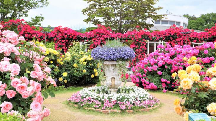 美しいバラが見頃に♡あしかがフラワーパーク『Rose Garden~春のバラまつり~』開催。5/31まで